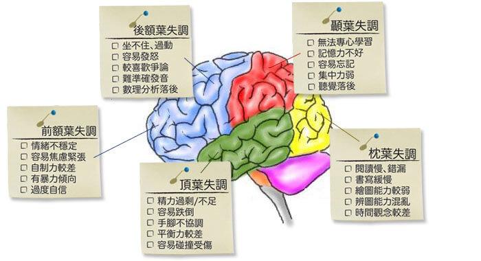 腦部開發音樂系列